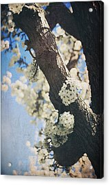 That March Acrylic Print by Laurie Search