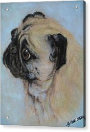 Pug's Worried Look Acrylic Print