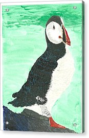 That's Another Puffin Year Over Acrylic Print by Tracey Williams