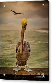 That's Mr. Pelican To You Acrylic Print by Steven Reed