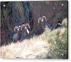The 3 Amigos Acrylic Print