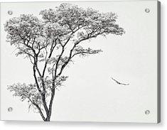 The African Eagle Acrylic Print