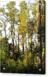 Acrylic Print featuring the photograph The Alder Grove by I'ina Van Lawick