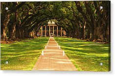 Acrylic Print featuring the photograph The Alley Of Oaks by Photography  By Sai
