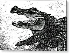 The Alligator Acrylic Print