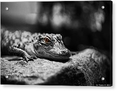 The Alligator's Eying You Acrylic Print by Linda Leeming