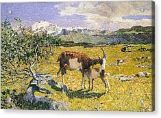 The Alps In May Acrylic Print by Giovanni Segantini
