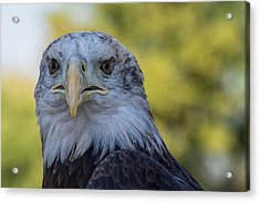 Acrylic Print featuring the photograph The American Eagle by Jeanne May