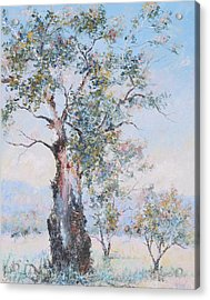 The Ancient Gum Tree Acrylic Print by Jan Matson