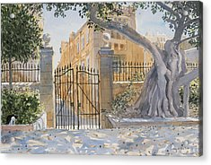 The Ancient Tree Acrylic Print by Lucy Willis