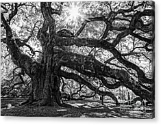 The Angel Oak Bw Acrylic Print by Deborah Scannell