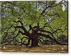 The Angle Oak Acrylic Print by Will Burlingham