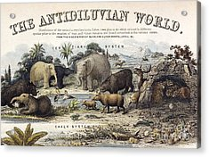 The Antidiluvian World, 1849 Acrylic Print
