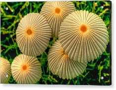 Acrylic Print featuring the photograph The Ants Raised Their Umbrellas by Dennis Baswell