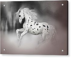 The Appaloosa Acrylic Print