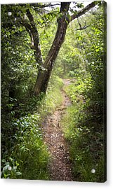 The Appalachian Trail Acrylic Print by Debra and Dave Vanderlaan