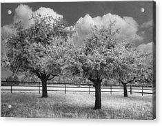 The Apple Orchard Acrylic Print by Debra and Dave Vanderlaan