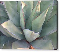 The Arizona Desert Acrylic Print by Jean Marie Maggi