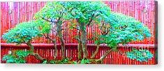 The Art Of Bonsai Acrylic Print by Ann Johndro-Collins