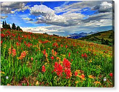 The Art Of Wildflowers Acrylic Print by Scott Mahon