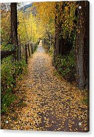 The Aspen Trail Acrylic Print
