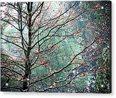 The Aura Of Trees Acrylic Print by Angela Davies