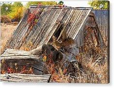 Acrylic Print featuring the photograph The Autumn Of Nebraska by Bill Kesler