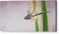 The Awakened One Acrylic Print by Dianna Poindexter
