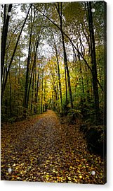 The Back Roads Of Autumn Acrylic Print by David Patterson