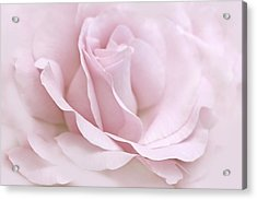 The Ballerina Pink Rose Flower Acrylic Print by Jennie Marie Schell