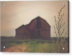 The Barn Daylight Version Acrylic Print by Carrie Ann Grippo-Pike