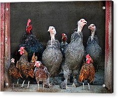The Barnyard Gang Acrylic Print by Lori Deiter