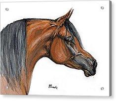 The Bay Arabian Horse 18 Acrylic Print by Angel  Tarantella
