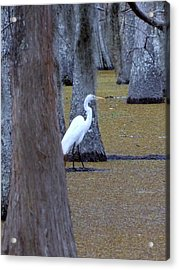 Acrylic Print featuring the photograph The Bayou's White Knight by John Glass