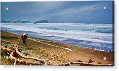 The Beach Comber Acrylic Print by Dale Stillman