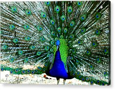 Acrylic Print featuring the photograph The Beautiful Plumage by Kathy  White