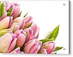 The Beautiful Purple Tulips Acrylic Print