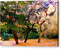 The Beautiful Trees Of Florida Acrylic Print