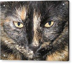 The Beauty Mau Acrylic Print