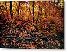 The Beauty Of Autumn  Acrylic Print by Saija  Lehtonen