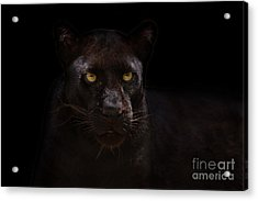 The Beauty Of Black Acrylic Print by Ashley Vincent