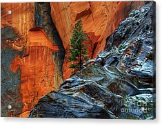 The Beauty Of Sandstone Zion Acrylic Print by Bob Christopher