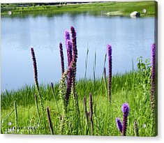 Acrylic Print featuring the photograph The Beauty Of The Liatris by Verana Stark