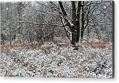 The Beauty Of Winter Acrylic Print by Aimee L Maher Photography and Art Visit ALMGallerydotcom