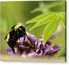 Acrylic Print featuring the photograph The Bee's Knees by Cathy Donohoue