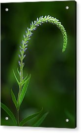 The Begining Acrylic Print by Bill Wakeley