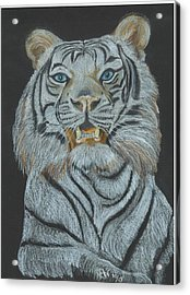 Acrylic Print featuring the pastel The Bengal by Carol Wisniewski