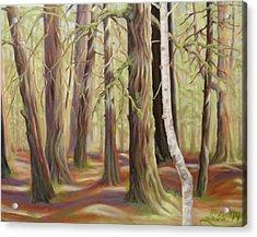 The Birch Tree Acrylic Print