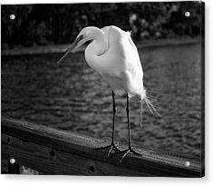 The Bird Acrylic Print