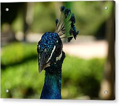 Acrylic Print featuring the photograph The Bird King by Janina  Suuronen